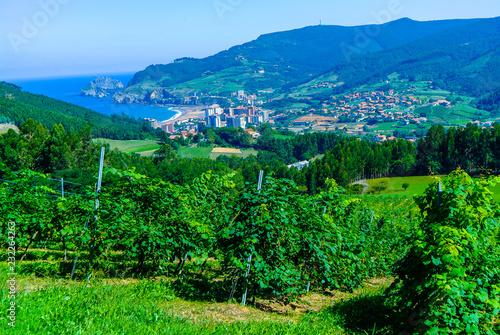 Viñedos en la zona costera de la localidad de Bakio, Vizcaya, País Vasco