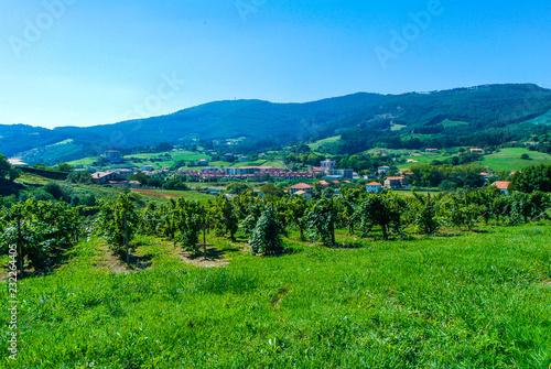 Viñedos de la localidad costera de Bakio, Vizcaya, País Vasco