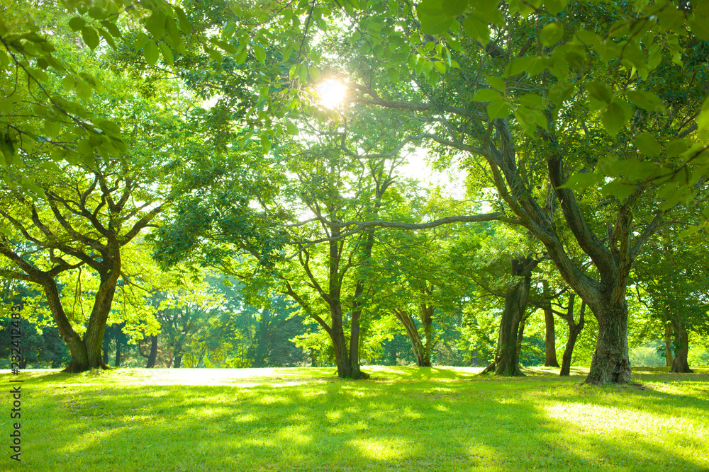 Fototapeta słoneczny las pełen zieleni