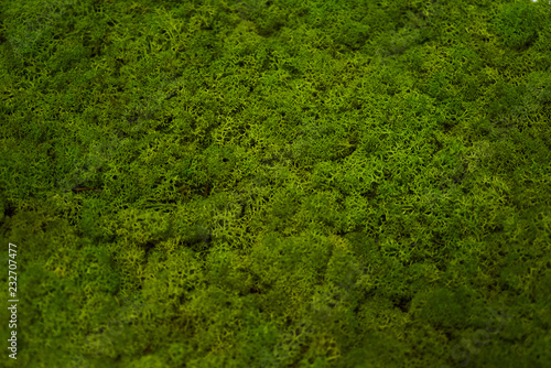 Canvas Print Green moss grass texture background with copy space