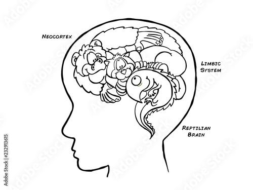 Triune Brain Black and White Fototapeta