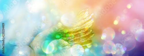 Engelsflügel in einem Lichtermeer aus Regenbogenfarben
