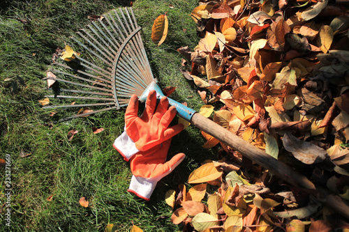 Wallpaper Mural A fan rake and gloves lie on the grass next to fallen autumn leaves