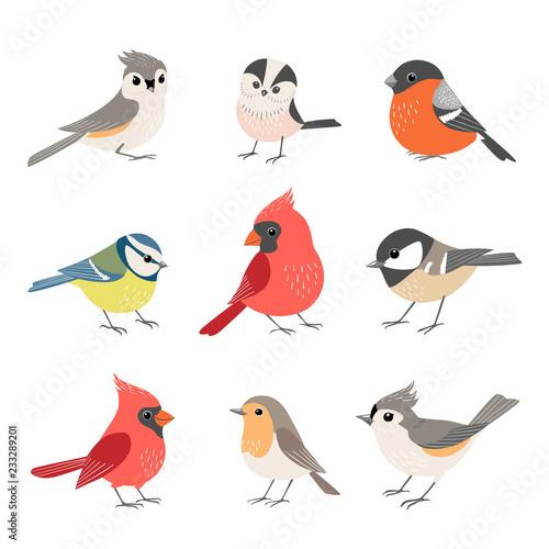 Obraz na płótnie Collection of cute winter birds