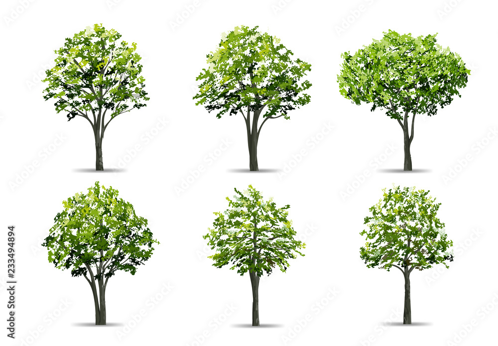 Wall mural Collection of realistic tree isolated on white background. Natural object for landscape design, park and outdoor graphic. Vector.