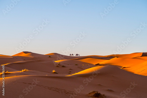 Camel caravan in Sahara desert, Morocco