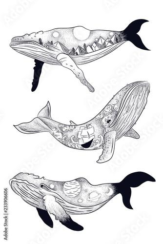 Fototapeta Ilustracja faz aktywności księżyca na sylwetce wieloryba