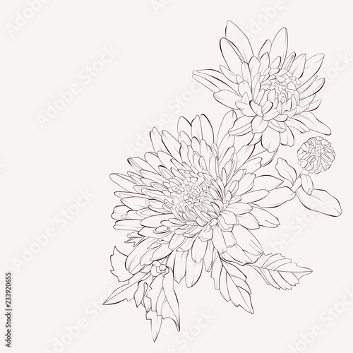 Cuadros en Lienzo Vector dahlia flower