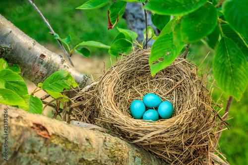 Photo Robins eggs