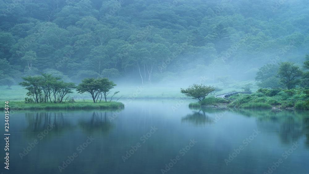 Fototapeta las nad brzegiem jeziora