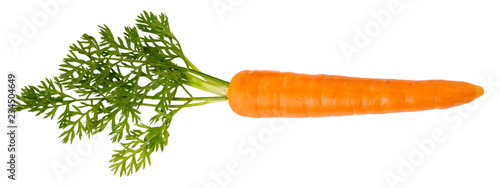 Photo SINGLE CARROT CUT OUT