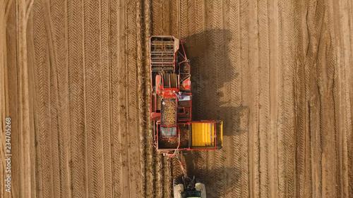 Slika na platnu Farm machinery harvesting potatoes