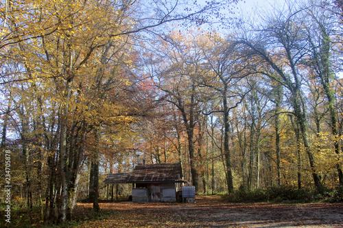 Foto cabane des chasseurs