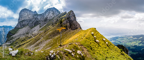 Fotografia grazing sheep on a mountain peak in the bernese alps, sigriswiler rothorn, switz
