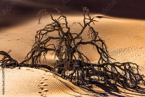 Dry beautiful tree on the background of the dunes with a beautiful texture of sand. Africa. Landscapes of Namibia. Sossusvlei. Namib-Naukluft National Park.