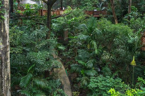 Leinwand Poster Tropical vegetation inside the Edward Youde Aviary at the Hong Kong Park, Hong K