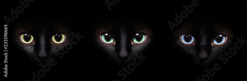 Eyes of the siamese cat in the darkness. Different eyes collage. Fototapeta