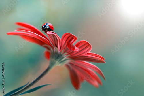 Obraz na płótnie 500px Photo ID: 178500237  Beautiful ladybug on leaf defocused background