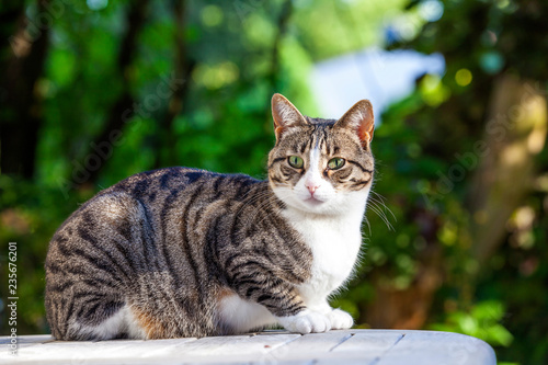 Fototapeta premium ładny kot relaksujący na drewnianym stole w ogrodzie