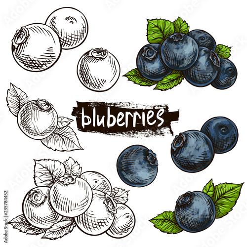 Stampa su Tela blueberry hand drawn set