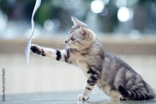 Fototapeta premium Pasiasty kotek bawi się taśmą.