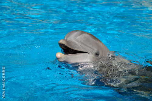 Photo Bottlenose dolphin with head above water