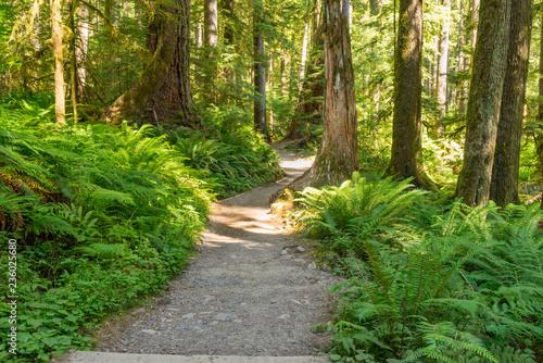 Fotografie, Obraz Hiking Trail through the Forest