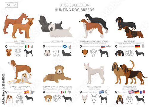 Canvas-taulu Hunting dogs collection isolated on white