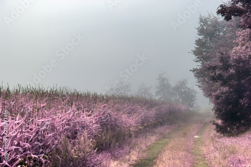 Photo Beautiful fantasy infrared landscape with lots of purpel elements and a deep blu