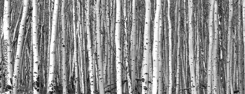 Photo Black and white trees background pattern