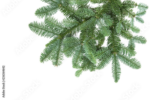 Canvas Print Pine tree branches isolated white background Christmas decoration