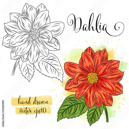 Fotografia, Obraz botanical art watercolor dahlia flower