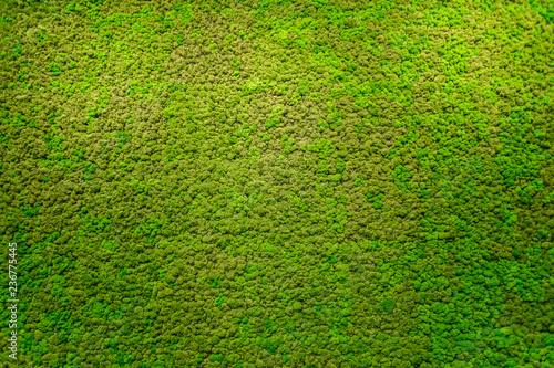 Canvas Print Green moss beautiful texture with good outdoor light