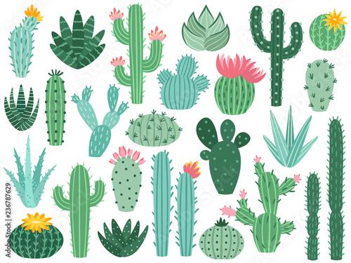 Obraz na plátně Mexican cactus and aloe