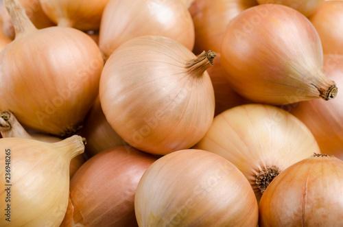 Stampa su Tela Pure organic raw onion