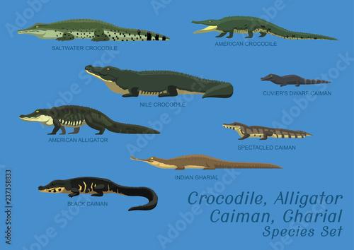 Fototapeta premium Różne gatunki krokodyli aligatora Caiman Gharial zestaw ilustracji wektorowych kreskówki