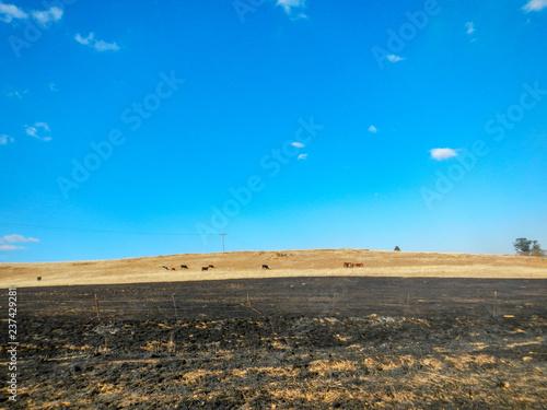 Canvas-taulu Firebreak on cattle farm