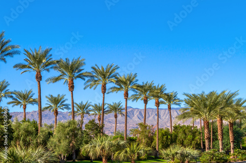 Fotografia Green landscape with a row of palm trees and mountain range in the background in