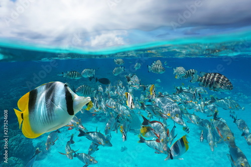 A school of tropical fish underwater and sky with cloud, split view above and below water surface, Rangiroa lagoon, Tuamotu, French Polynesia, south Pacific ocean