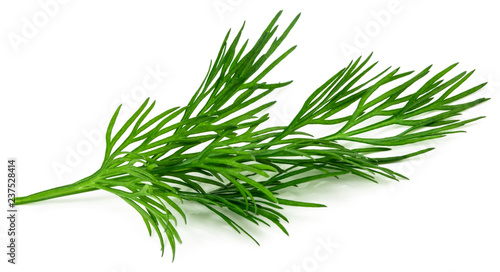 Canvas Print fresh green dill isolated on white background. macro