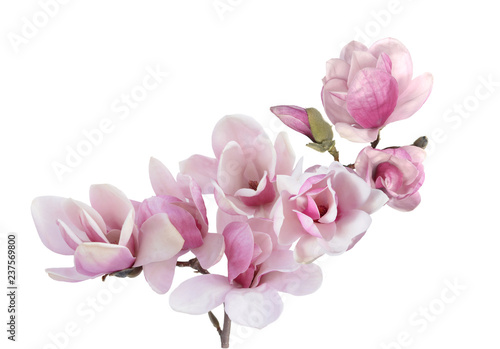 Carta da parati magnolia flower
