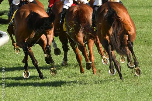 Horse racing action Fototapet