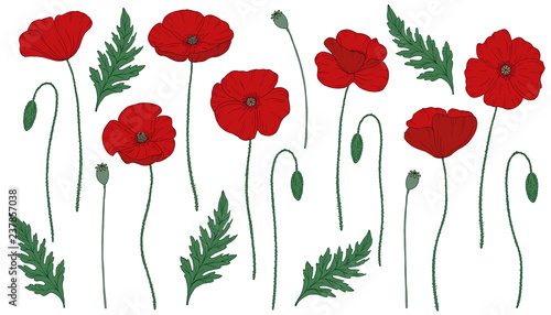 Red poppy flowers. Papáver. Green stems and leaves. Big set of elements for design. Hand drawn vector illustration. Monochrome black and white ink sketch. Line art. Isolated on white background.