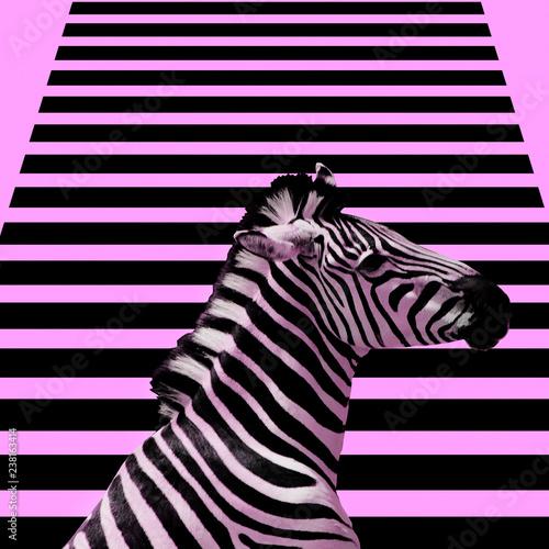 Wallpaper Mural Minimal Contemporary collage art.  Zebra and zebra background.