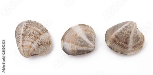 clams Tapéta, Fotótapéta