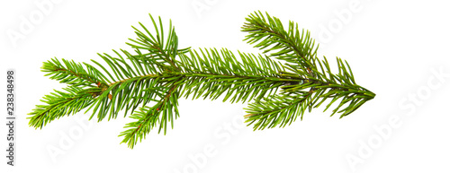 Fotografia Fir branch isolated on white