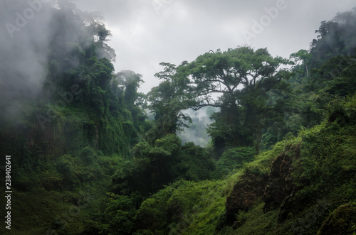 Canvas Print Foggy overgrown hills in rainforest of Cameroon, Africa.