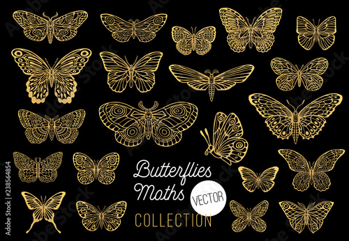 Butterflies drawing vector set, isolated, sketch style collection insert wings emblem symbols, golden, gold, black background Fototapeta