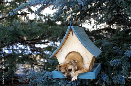 Photo dog stuck in small birdhouse