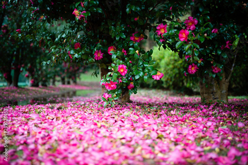 Fotografia, Obraz 花と水溜りと小道